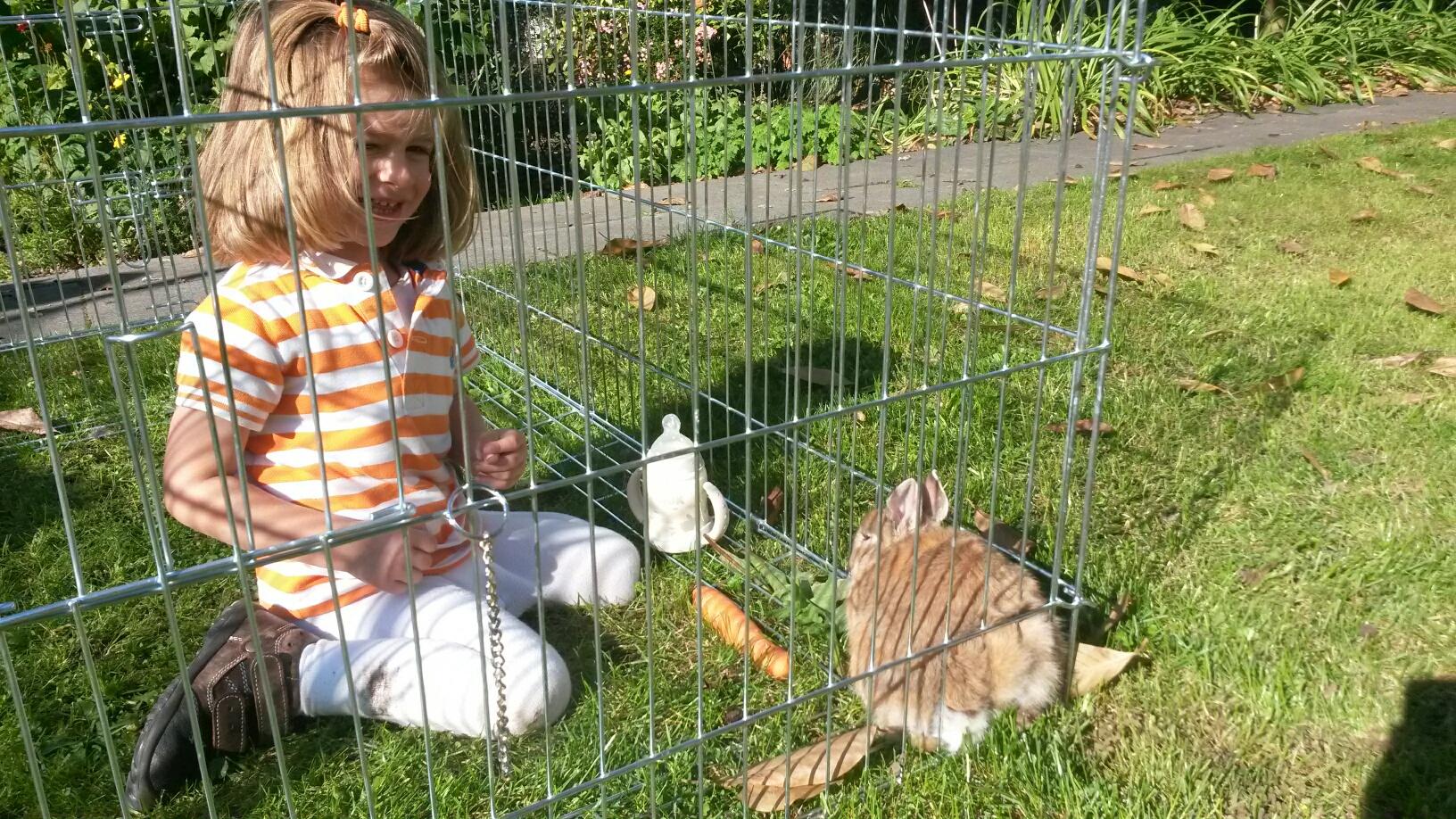 Käfighaltung bei Kaninchen und Kindern