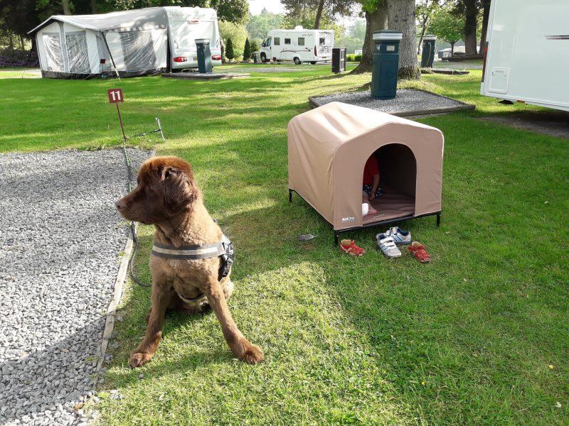 Armer obdachloser Hund