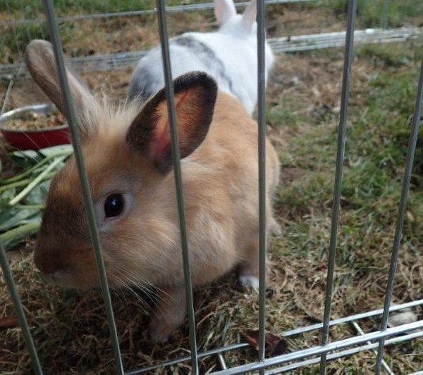 Notfelle - Die Kaninchen-Männer-WG