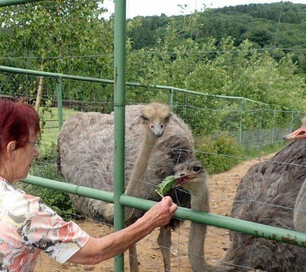 The Ostrich Effect - oder: wie viel Strauß steckt in mir?